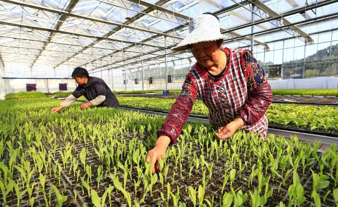 河南:高标准农田6163万亩,农业科技贡献率居第一方阵