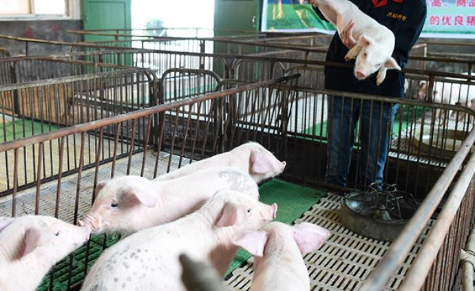 四川开工养猪场建设项目93个,预计新增生猪产能560万头