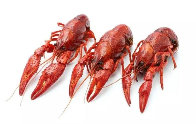 小龙虾高价30%上市 因商家订货早和电商入侵