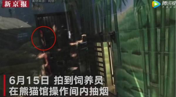武汉大熊猫遭虐待:现场画面遭曝光
