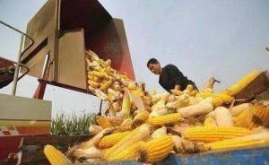 如何从供给侧改革农业?玉米去库存、绿色种养、农产品标准化