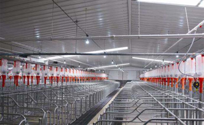 50家企业在京参加大型生猪养殖企业稳定生猪生产发展研讨会