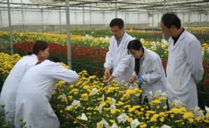 中国科学家发现菊花基因库核心种质资源,创离体缓慢生长技术